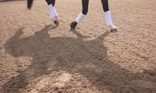 equine video of hoofs on ground